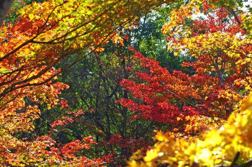 昭和記念公園201411-2