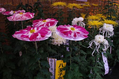 高幡不動尊201011-7