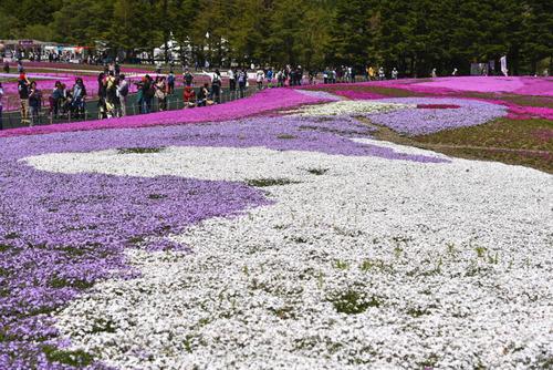 富士芝桜まつり2016