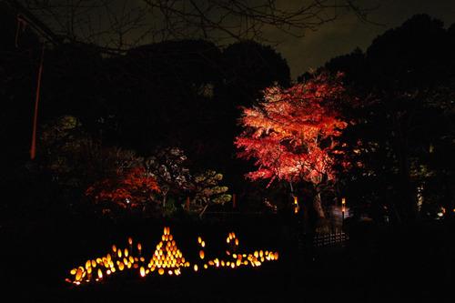 百草園ライトアップ2010-4