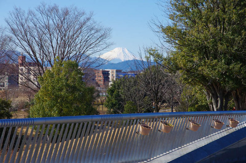 昭和記念公園201501-3