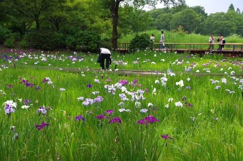 昭和記念公園201306-5
