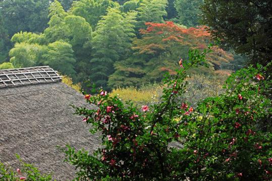 秋の百草園200911-3