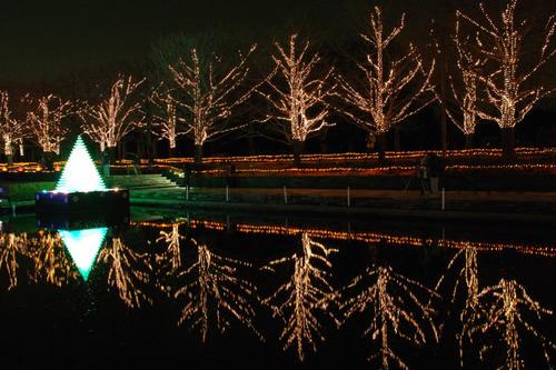 昭和記念公園イルミネーション201012-16