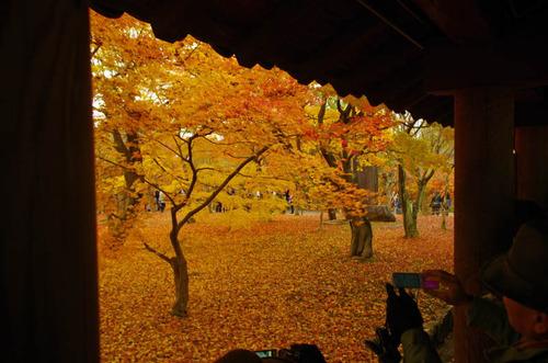 京都東福寺201211-2