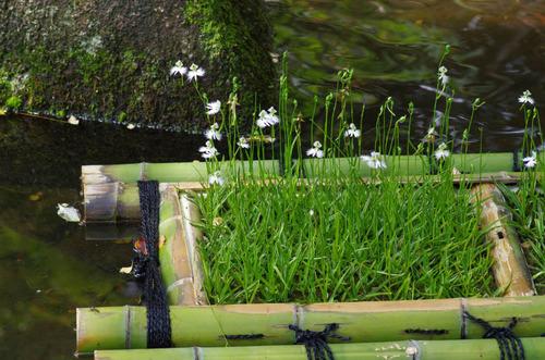 昭和記念公園201108-9