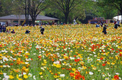 昭和記念公園20120428-10