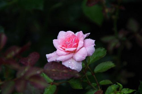 高幡不動尊20100710-12