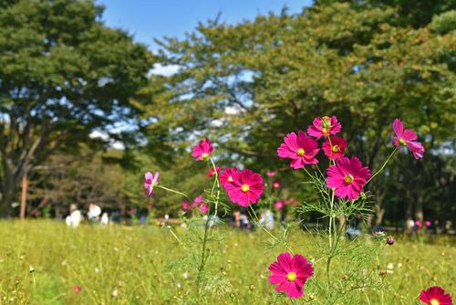 昭和記念公園201510-2
