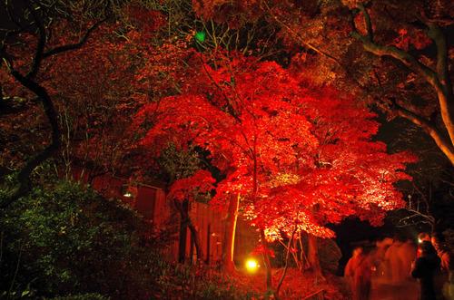 京王百草園201311-7