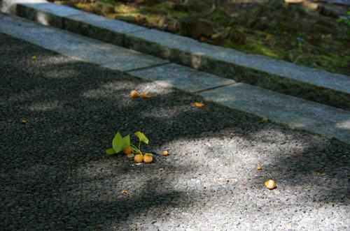 昭和記念公園201209-3