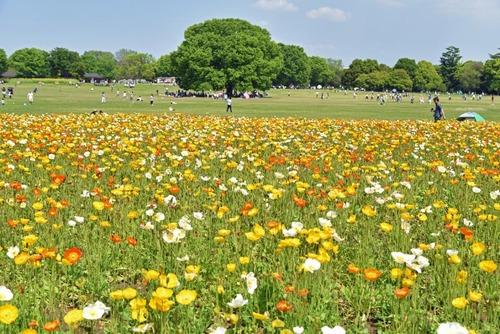 昭和記念公園201505-8