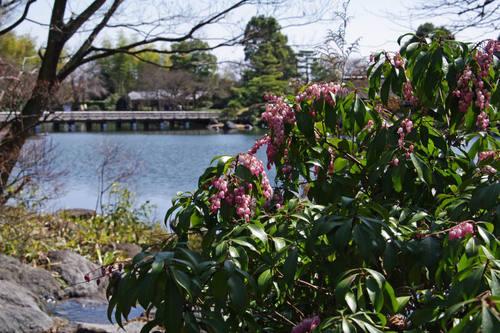 昭和記念公園日本庭園-3