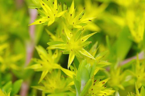 河川敷の花201106-4