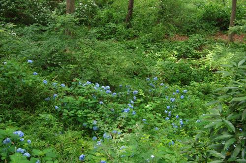 京王百草園201206-8