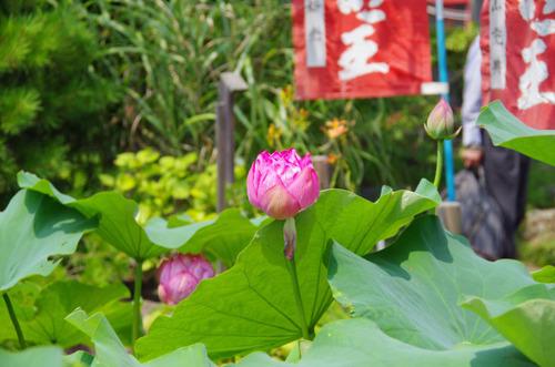 高幡不動尊201108-10