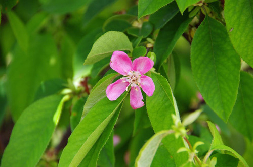 散歩道の花(5月)2012-2