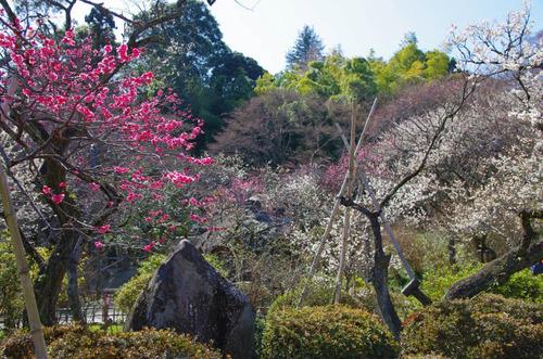 京王百草園201403-2