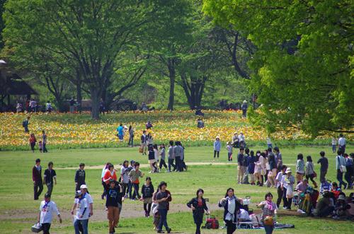 昭和記念公園20120428-2