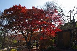 百草園の紅葉-S10