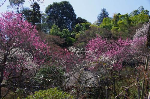 京王百草園201204-1
