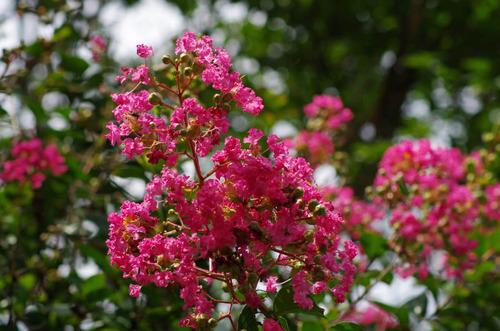 昭和記念公園201108-13
