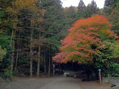 高尾山201111-2