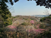 百草園梅祭090207-6