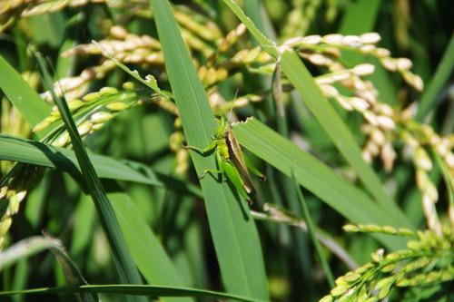 散歩道の虫たち201008-1