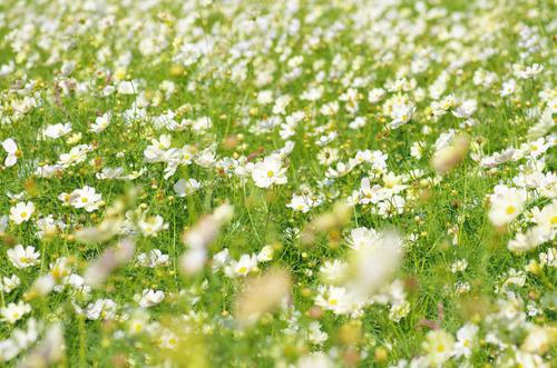 昭和記念公園201210-4