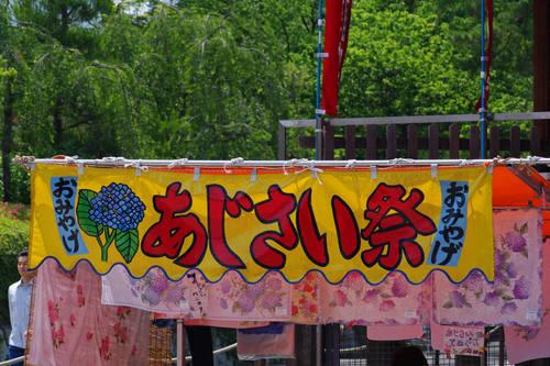 高幡不動尊あじさいの様子20100605-11