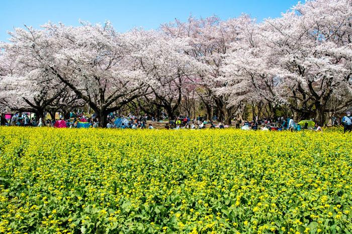 昭和記念公園201804