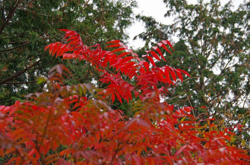 高尾山201111-10
