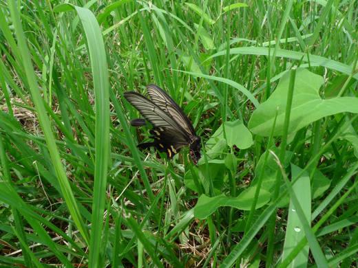 散歩で見つけた昆虫-3