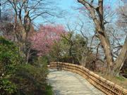 百草園梅祭090207-10
