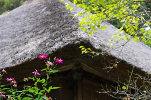 京王百草園201209-2