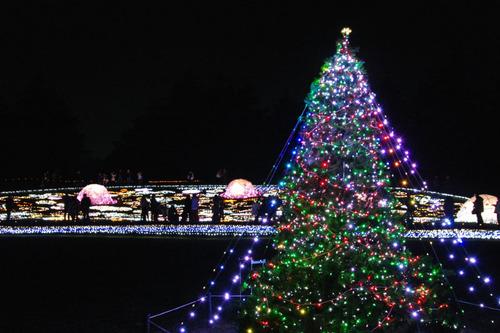 昭和記念公園イルミネーション201012-31