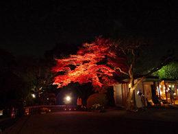 百草園の紅葉-S2