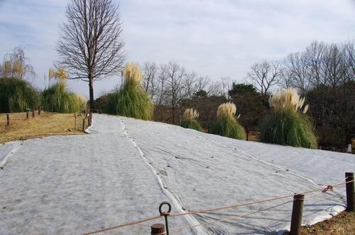 昭和記念公園201101-6