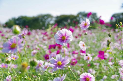 昭和記念公園201210-11