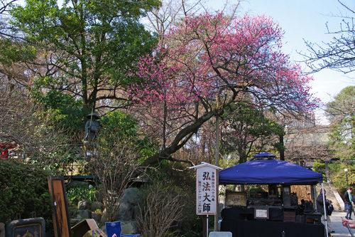 高幡不動尊20100221-2