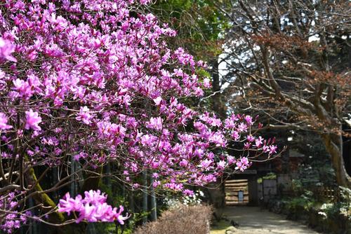 京王百草園201603-11