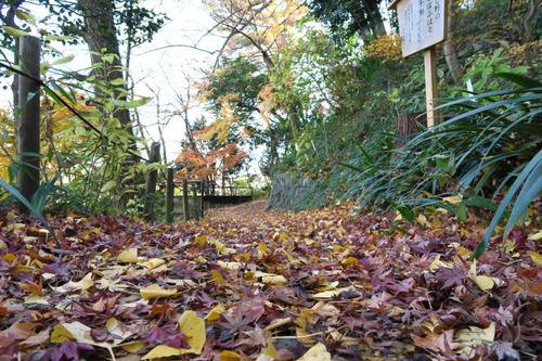 高幡不動201412-5