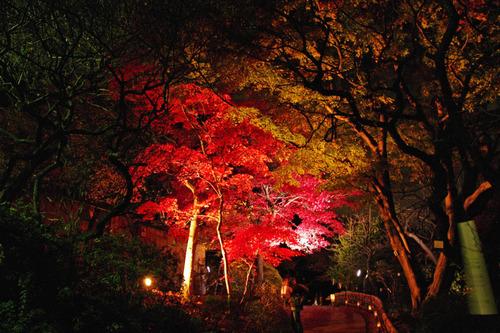 百草園ライトアップ2010-3