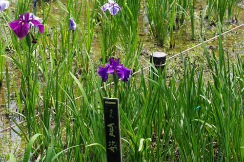 昭和記念公園水辺201006-10