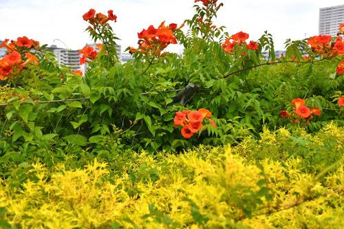 昭和記念公園201606-2