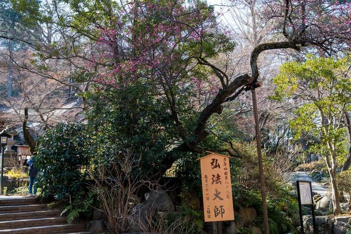 高幡不動尊201902
