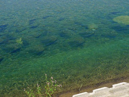 水辺の楽校200909-8