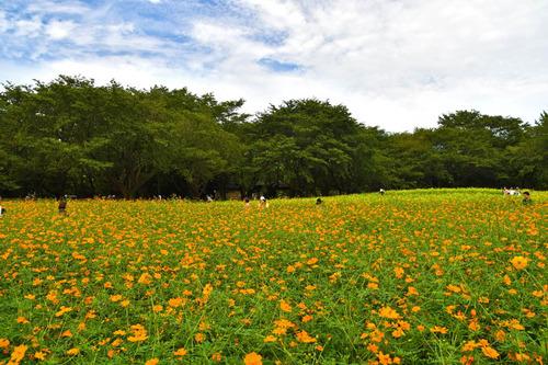 昭和記念公園201609