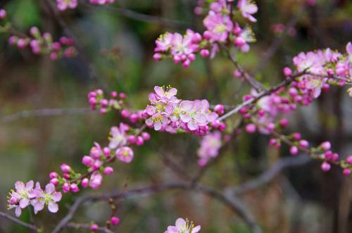 4月の花201104-3